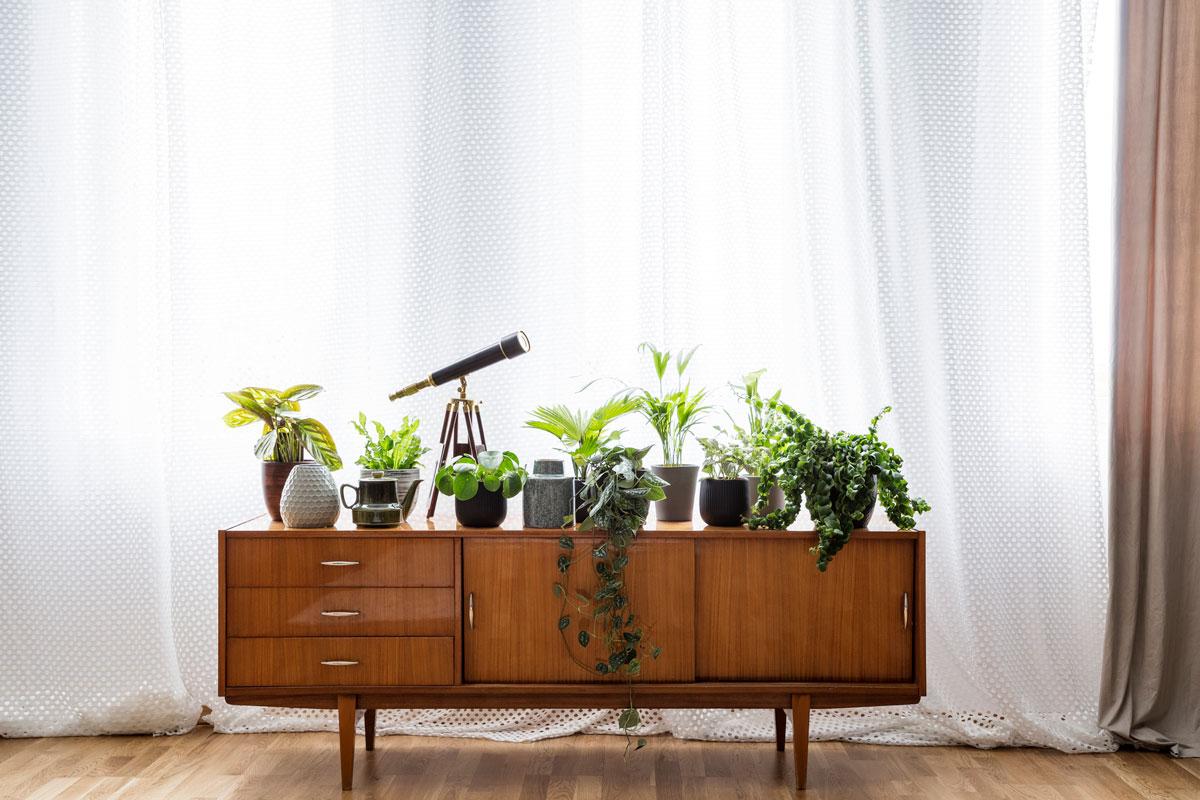 добавьте растения