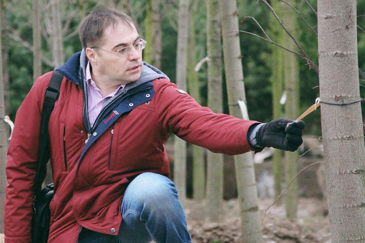 Садовник Иван Мальцев выбирает дерево