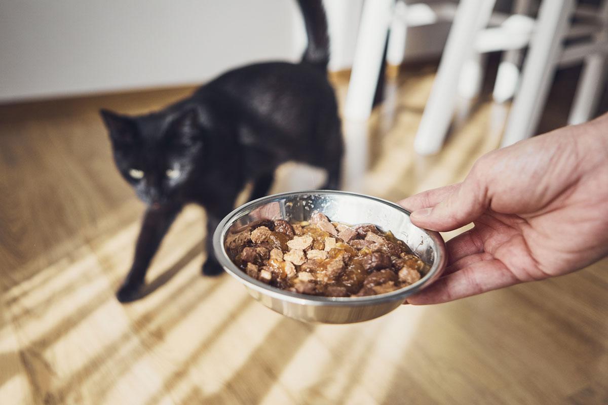 Миска с влажным кошачьим кормом