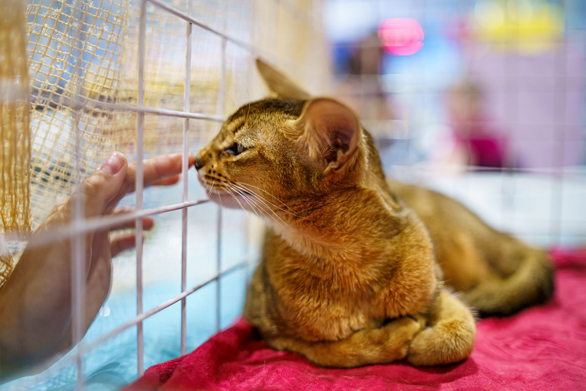 Рыжий кот в клетке