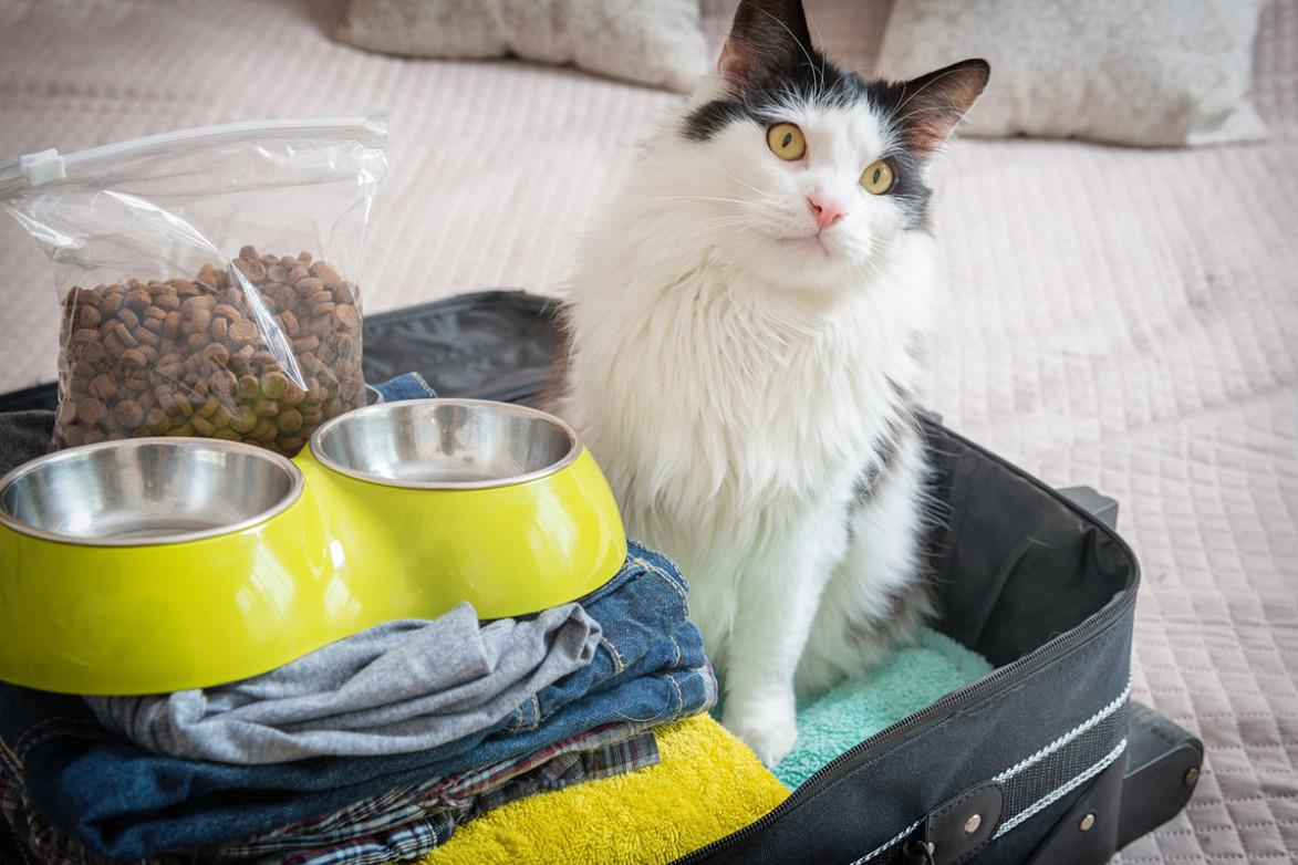Котик возле миски с кормом